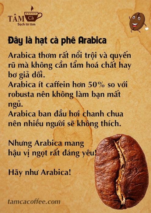 Be like bill - Hạt cà phê Arabica