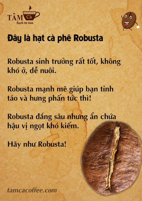 Be like bill - Hạt cà phê Robusta