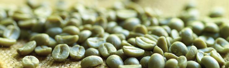 Hạt cafe xanh - cà phê tươi mới